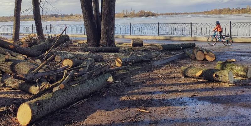 О вырубке деревьев в Волжском парке