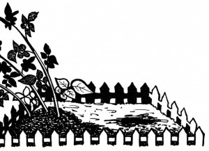 огород_02