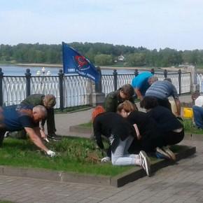 В Рыбинске появился цветочный триколор