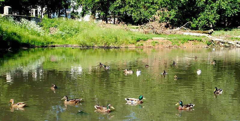 Карякинский парк в Рыбинске